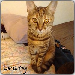 leary
