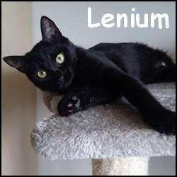 Lenium