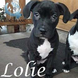 Lolie