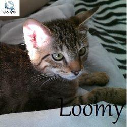 loomy