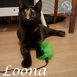 loona