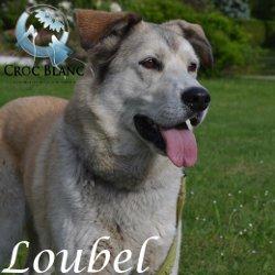 Loubel