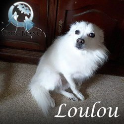Loulou