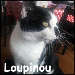 Loupinou