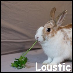 Loustic