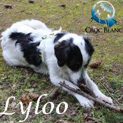 Lyloo