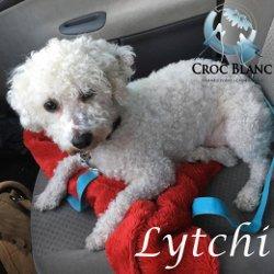 Lytchi