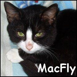 Macfly