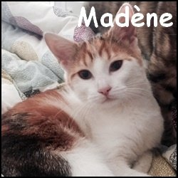 Madene