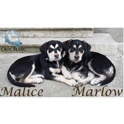 Malice et Marlow
