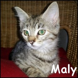 Maly