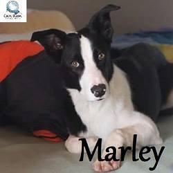 marley border