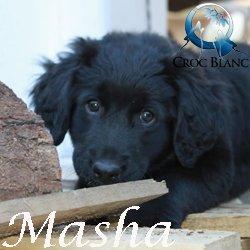 Masha2