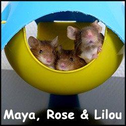 Maya rose lilou