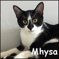 Mhysa