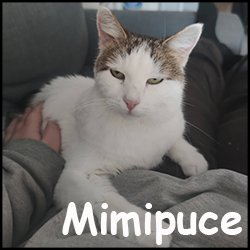 Mimipuce