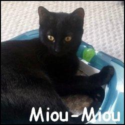 MiouMIou