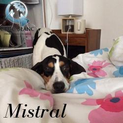 Mistral 2