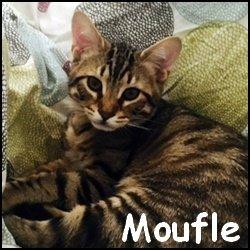 Moufle