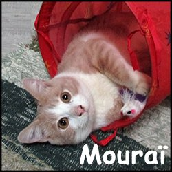 Mouraï