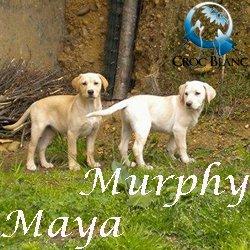 Murphy Maya