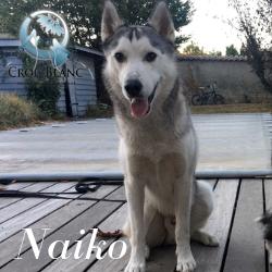 Naiko2