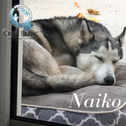 Naiko3