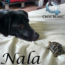 Nala2