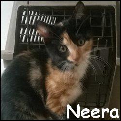 Neera