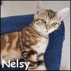Nelsy