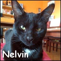 Nelvin