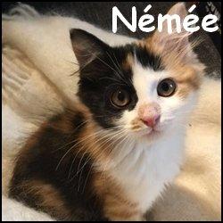 Nemee
