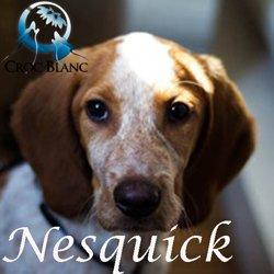 Nesquick2