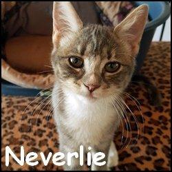 Neverlie