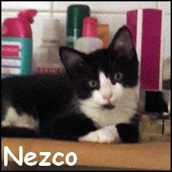 Nezco