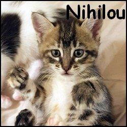 Nihilou