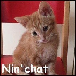Nin'chat