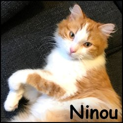 Ninou 2