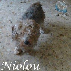 Niolou