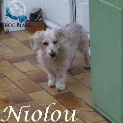 Nioulou