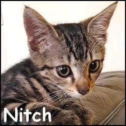 Nitch