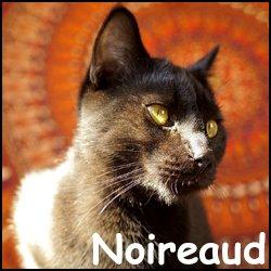 Noireaud