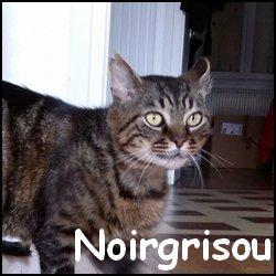 Noirgrisou