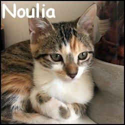 Noulia