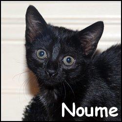 Noume
