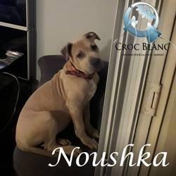 Noushka1