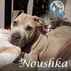 Noushka2