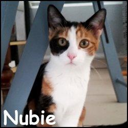 Nubie