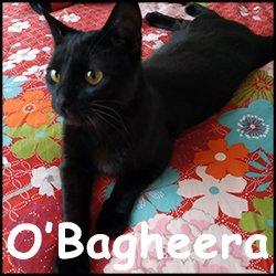 O'Bagheera