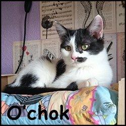 O'Chok